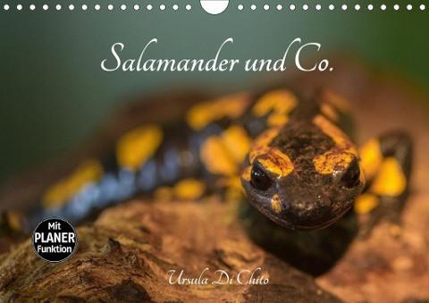 Salamander und Co. (Wandkalender 2020 DIN A4 quer)