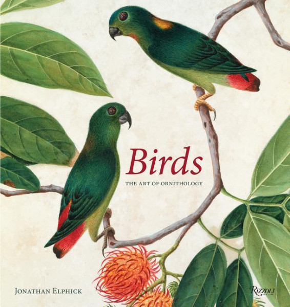 Birds: The Art of Ornithology