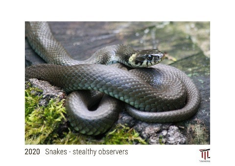 Snakes - stealthy observers 2020 - White Edition - Timocrates wall calendar with UK holidays / pictu