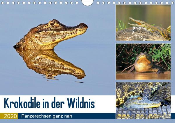 Krokodile in der Wildnis (Wandkalender 2020 DIN A4 quer)