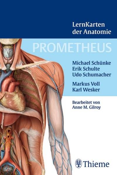 Prometheus Lernkarten der Anatomie: Box mit 367 Lernkarten aus den Gebieten Rücken, Thorax, Abdomen