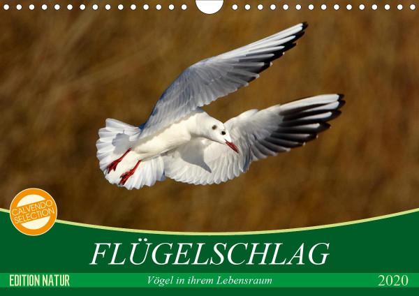 Flügelschlag - Vögel in ihrem natürlichen Lebensraum (Wandkalender 2020 DIN A4 quer)