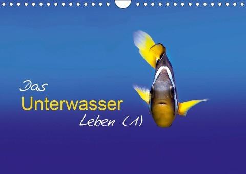 Das Unterwasser Leben (1) (Wandkalender 2020 DIN A4 quer)