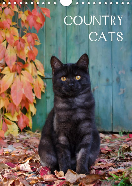 COUNTRY CATS (Wandkalender 2020 DIN A4 hoch)