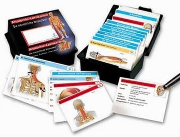 Anatomie Lernkarten - Die menschliche Muskulatur