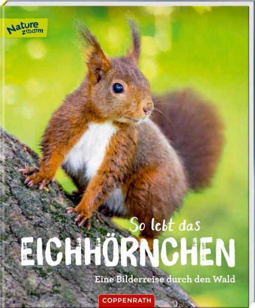 So lebt das Eichhörnchen