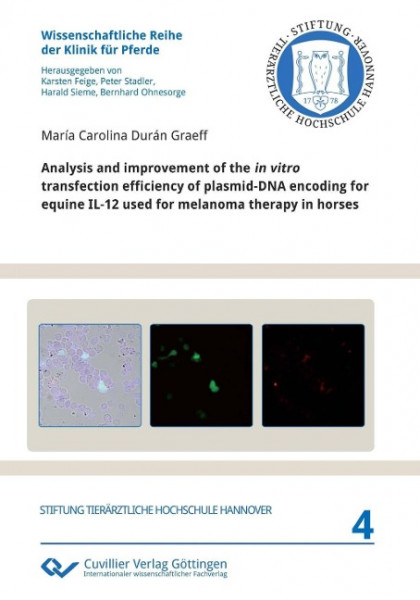Analysis and improvement of the in vitro transfection efficiency of plasmid-DNA encoding for equine