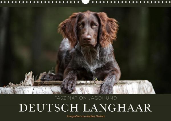 Faszination Jagdhund - Deutsch Langhaar (Wandkalender 2020 DIN A3 quer)