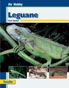 Ihr Hobby Leguane